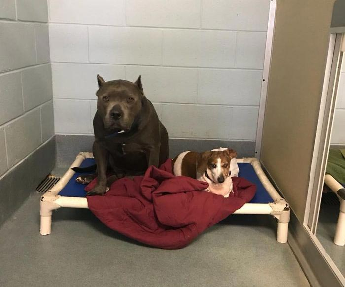 две собаки вместе отдыхают