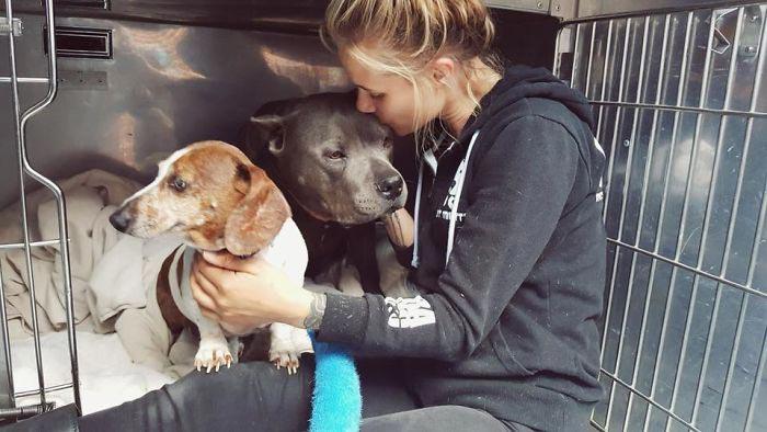две собаки рядом с девушкой