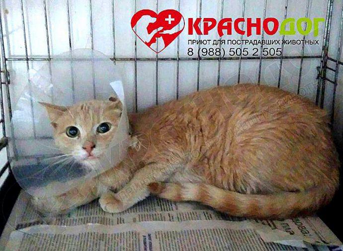 рыжий кот в конусе