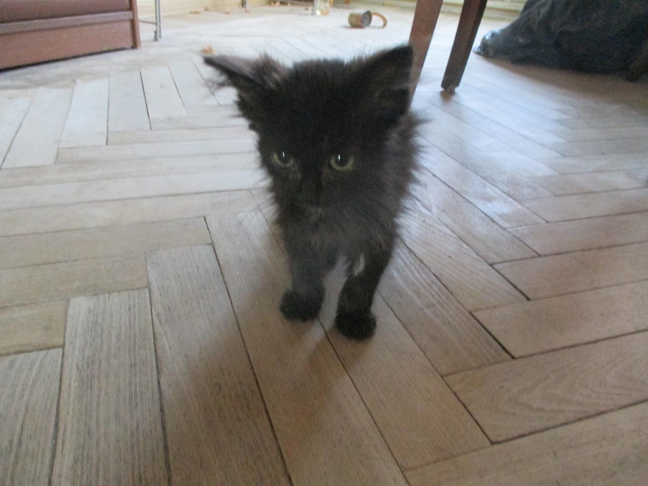 черный котенок в доме