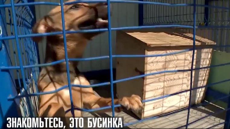 собака в вольере