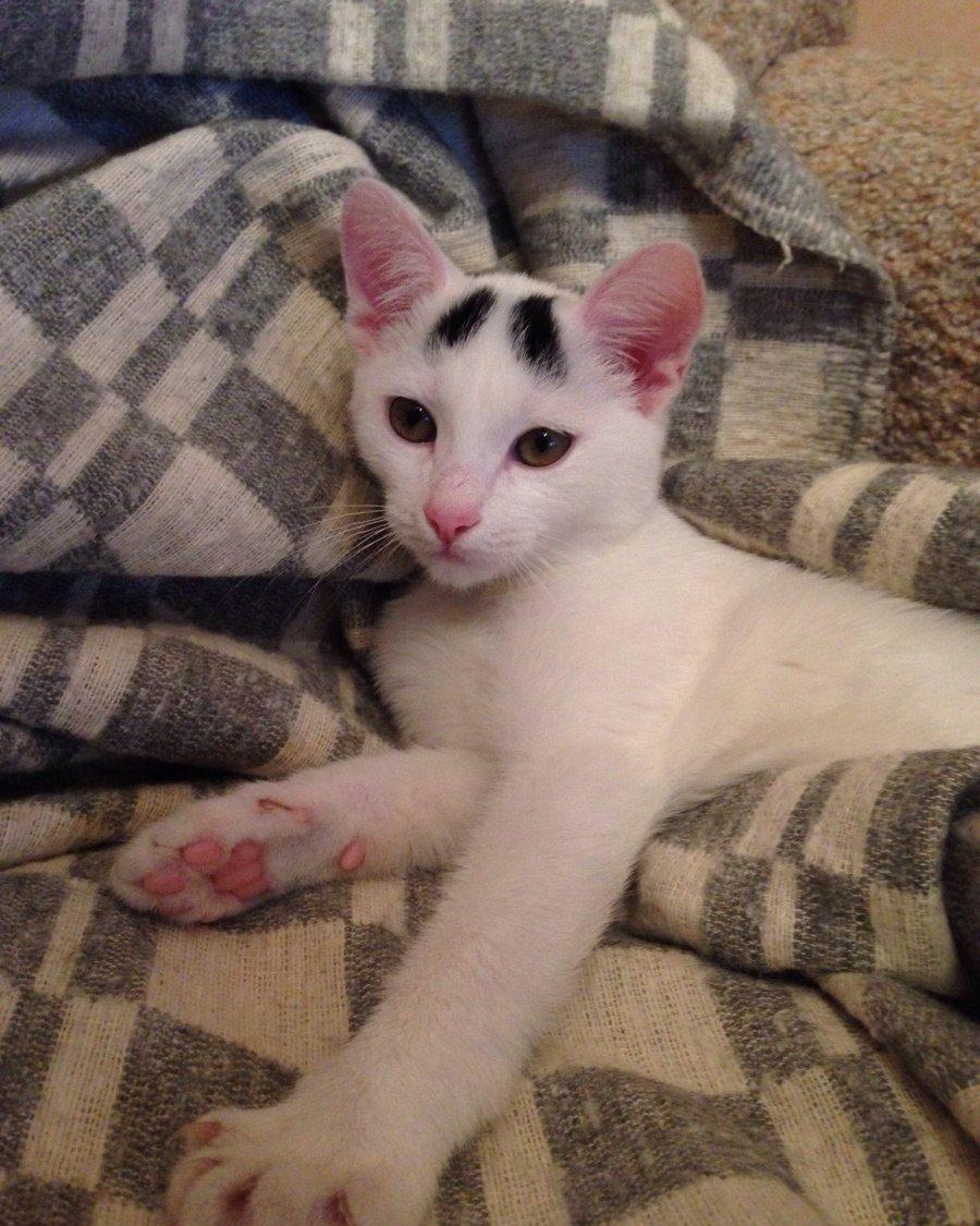 кошка с бровями на кровати
