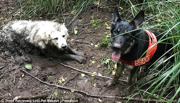спасение собаки рис 4