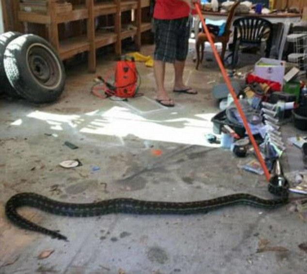 змея на полу сарая
