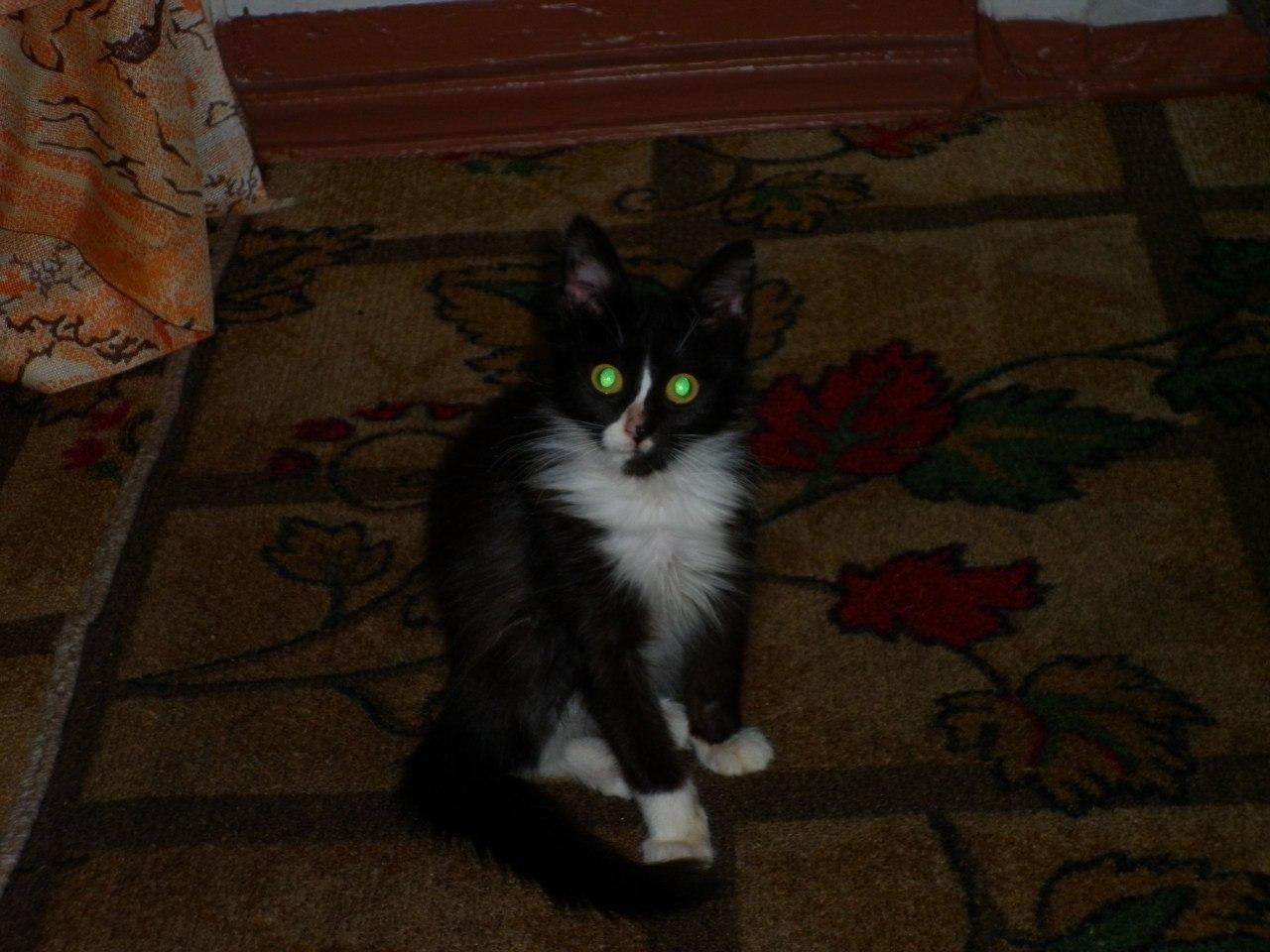 черно-белый кот сидит на полу