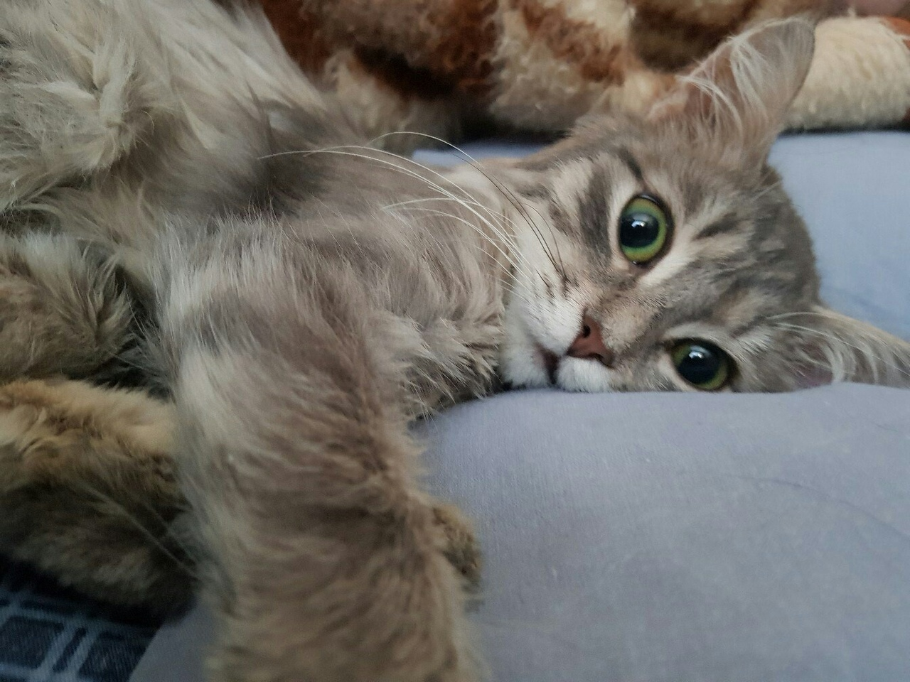 полосатая кошка на кровати