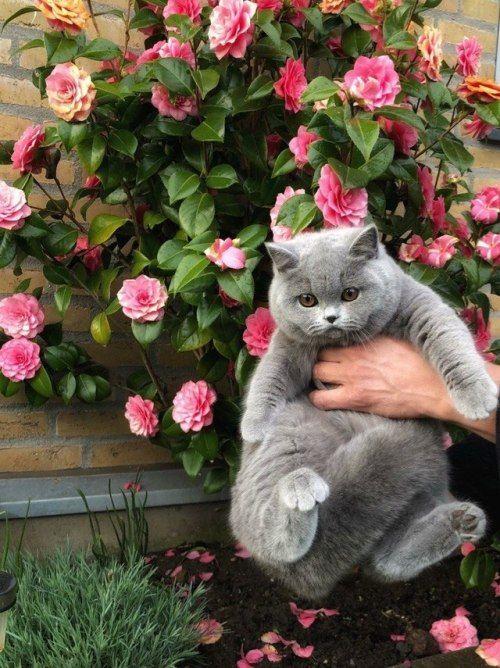Кот и розы