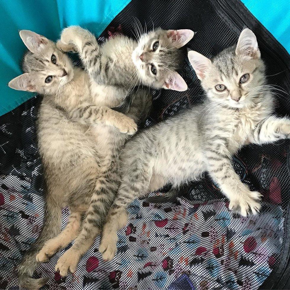 три котенка лежат на кровати