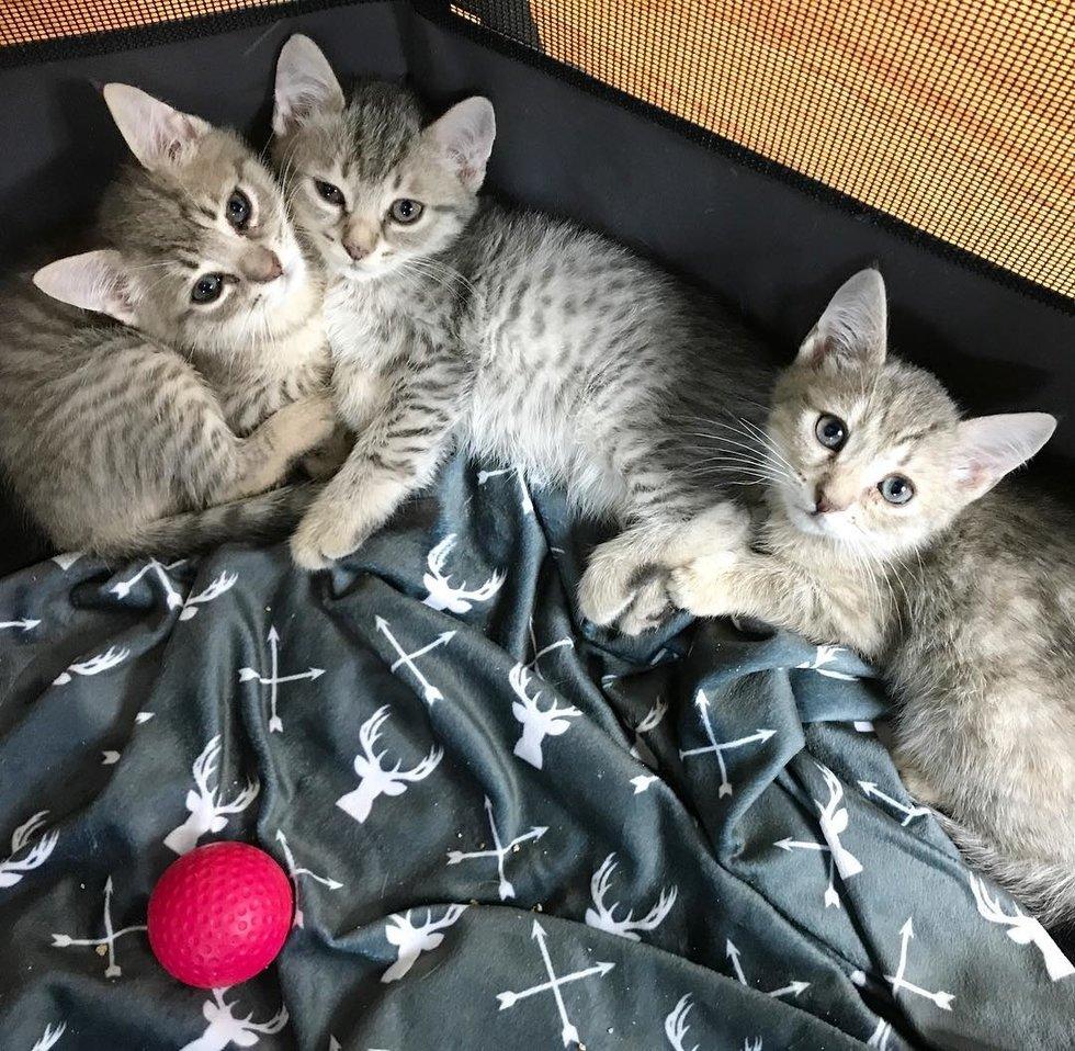 три котенка на кровати