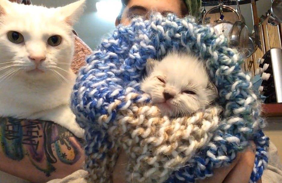 кошка с котенком рис 2