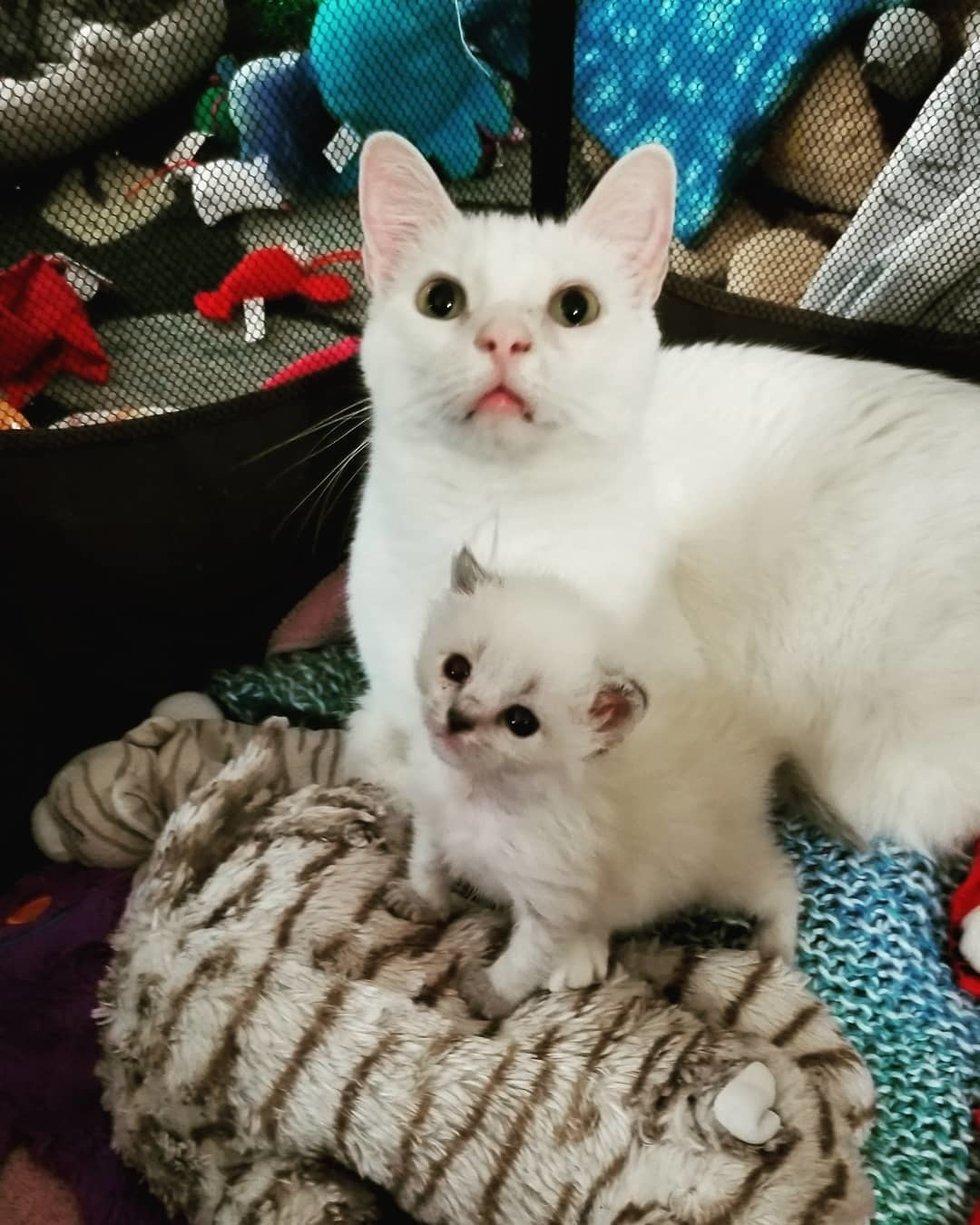 кошка с котенком рис 3