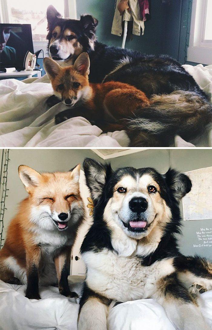 собака и лиса на кровати