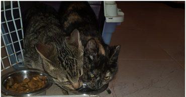два кота едят из одной миски