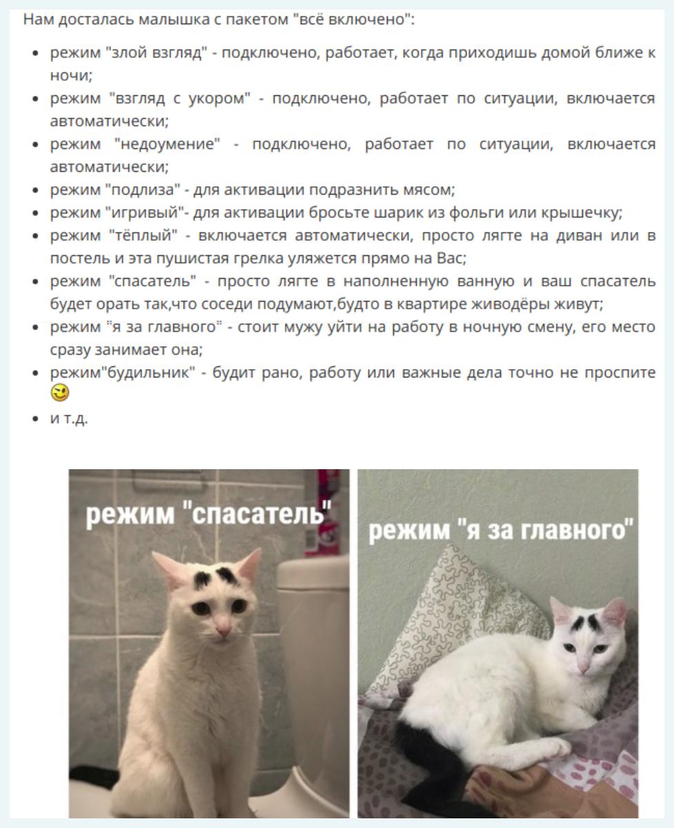 текст про кошку