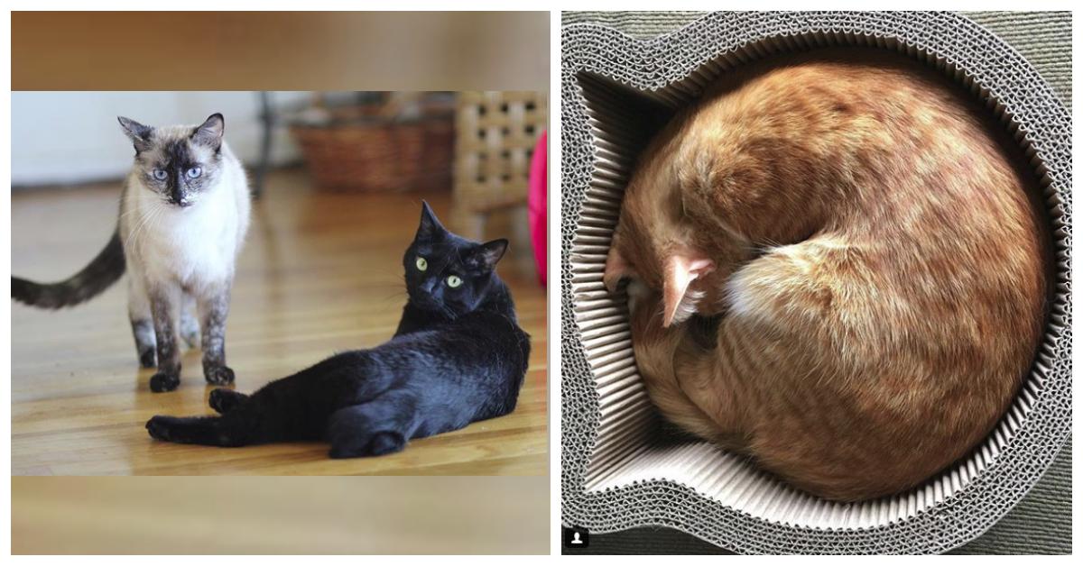 два кота на полу