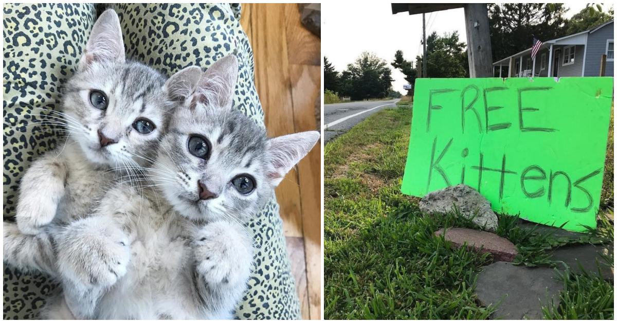 два котенка и надпись по-английски