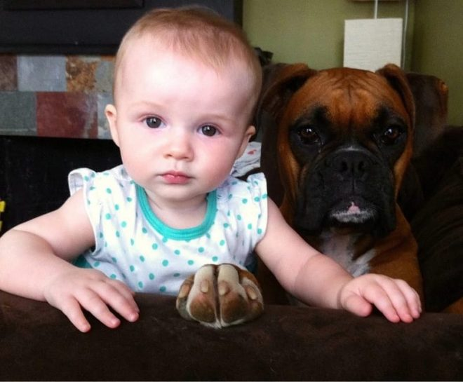 Боксер с ребенком