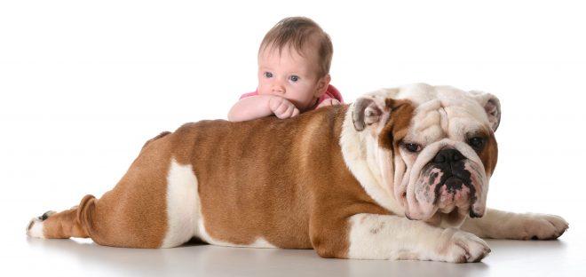 собака с ребенком