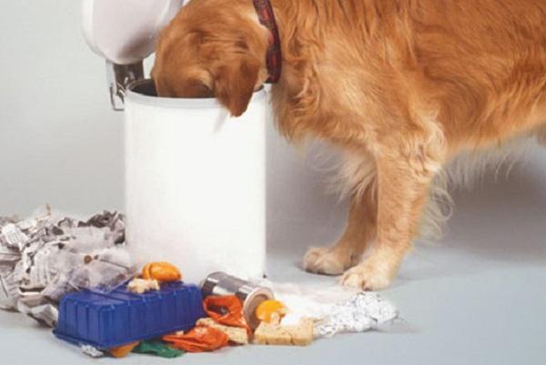 собака в мусорном ведре