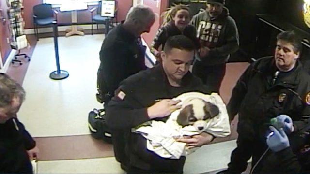 щенок на руках у полицейского