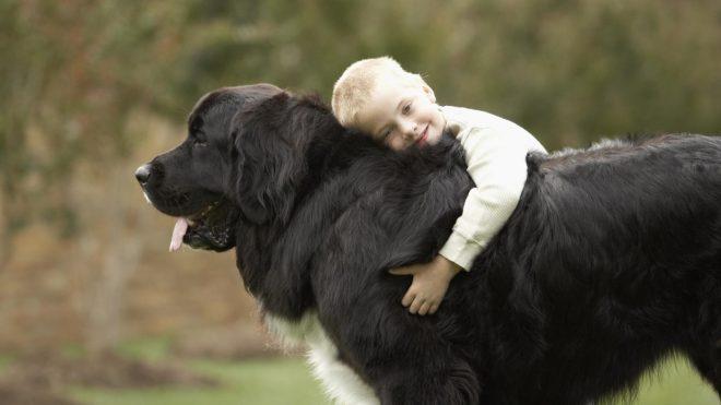 ребенок на собаке