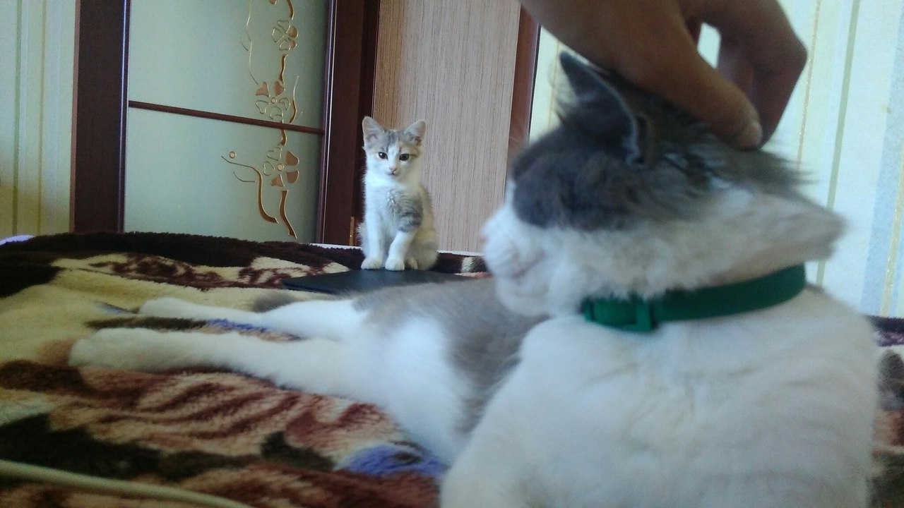 кошка дружит с котенком