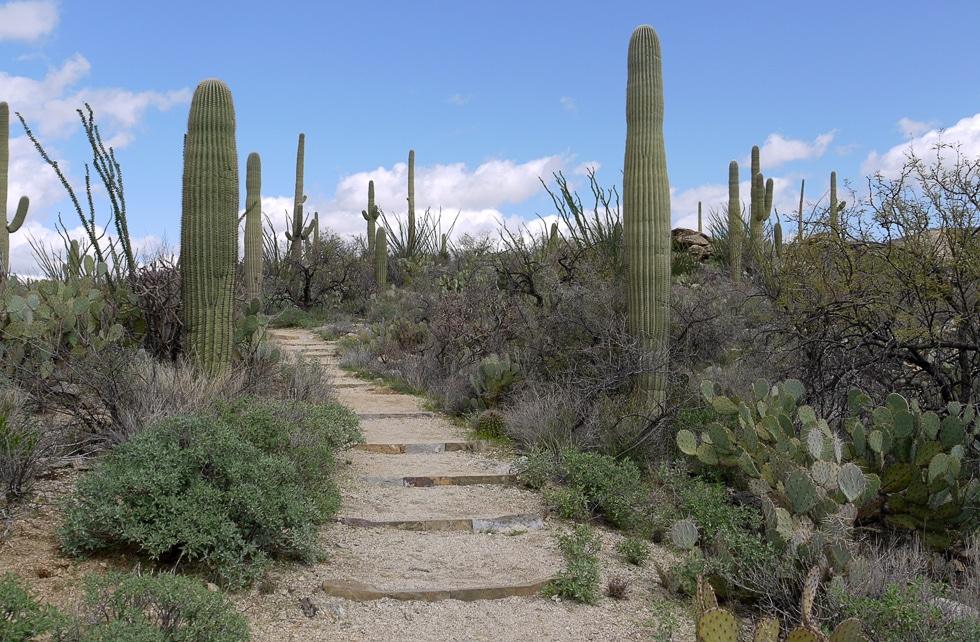 Аризона, парк Сагуаро