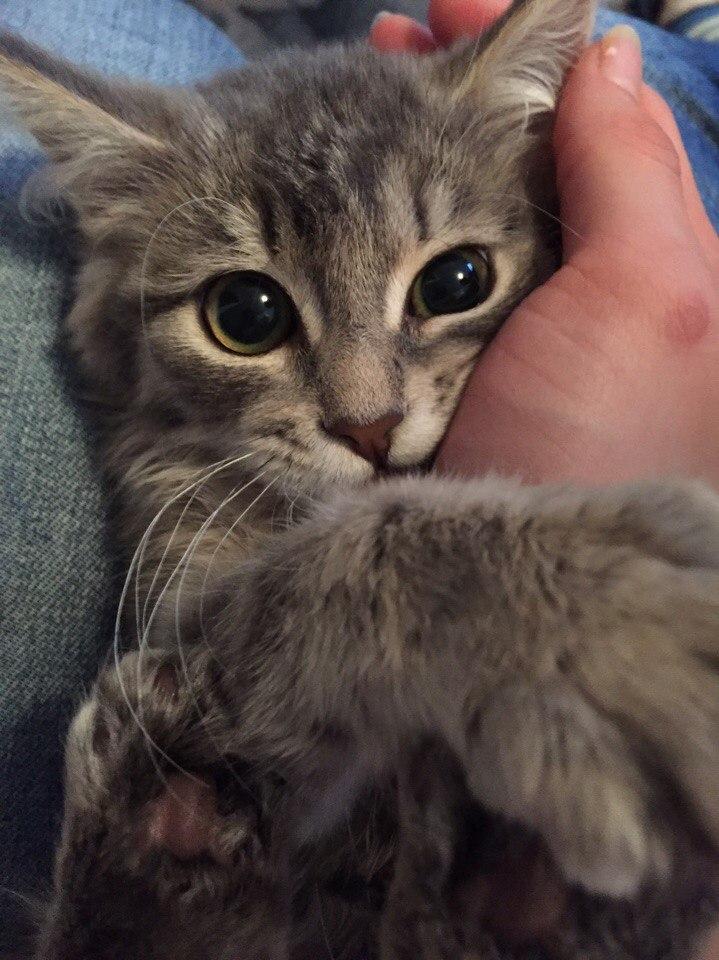 полосатую кошку гладят