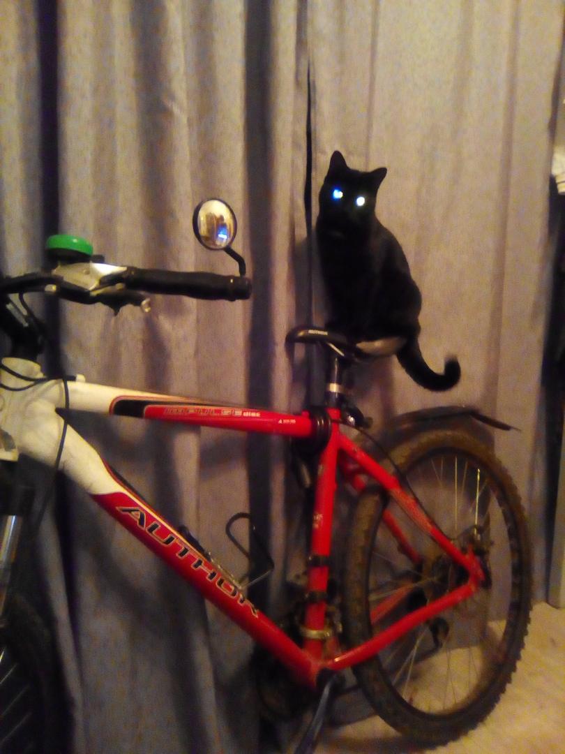 черная кошка сидит на велосипеде