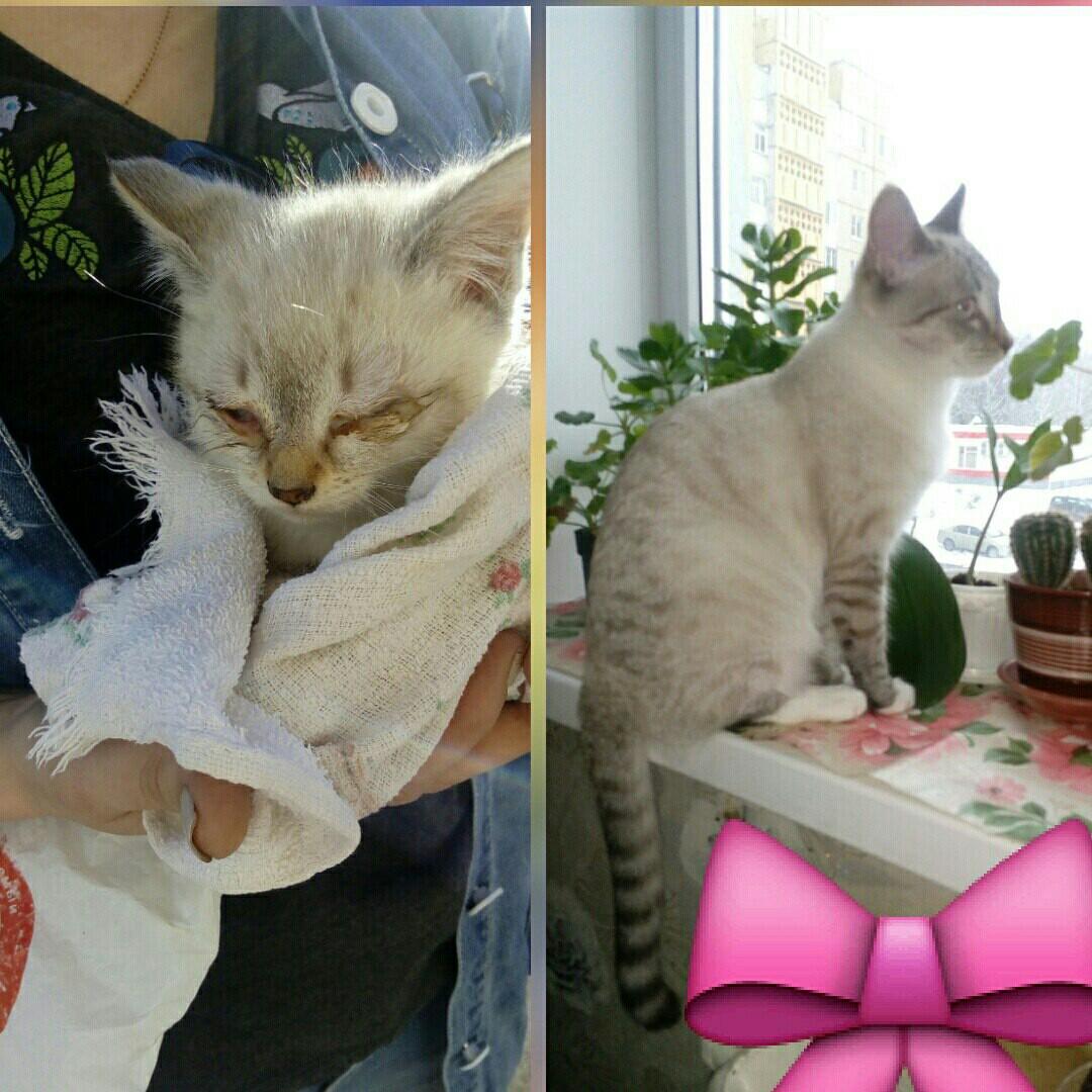 котенок фото до и после