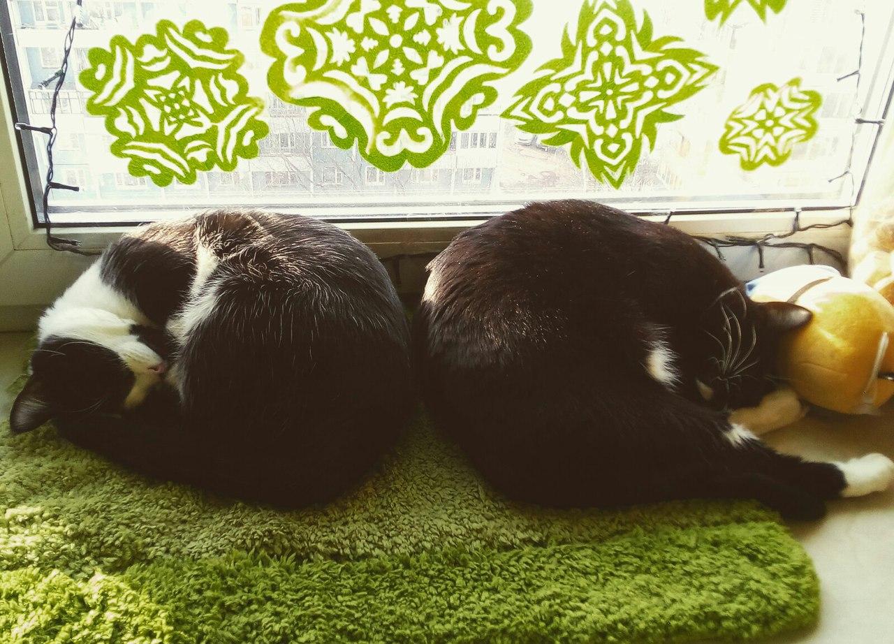 два кота спят рядом
