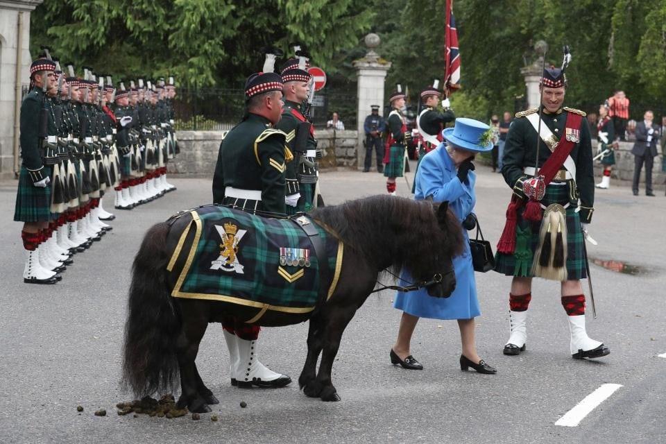 королева уходит от пони