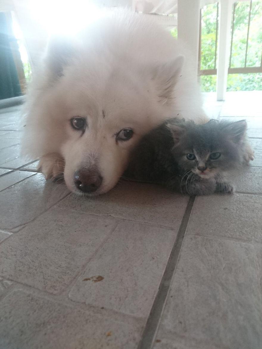собака и котенок на полу