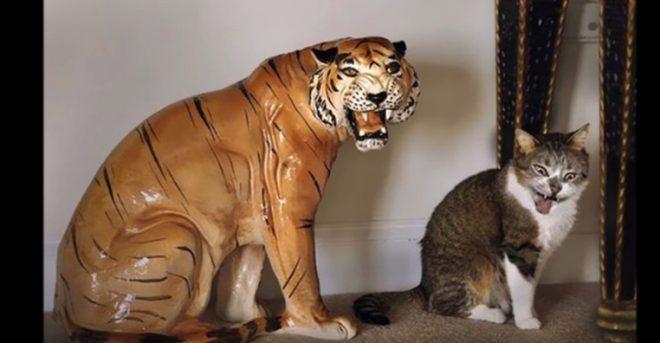 кот и тигр