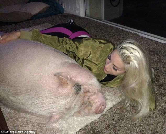 девушка рядом со свиньей