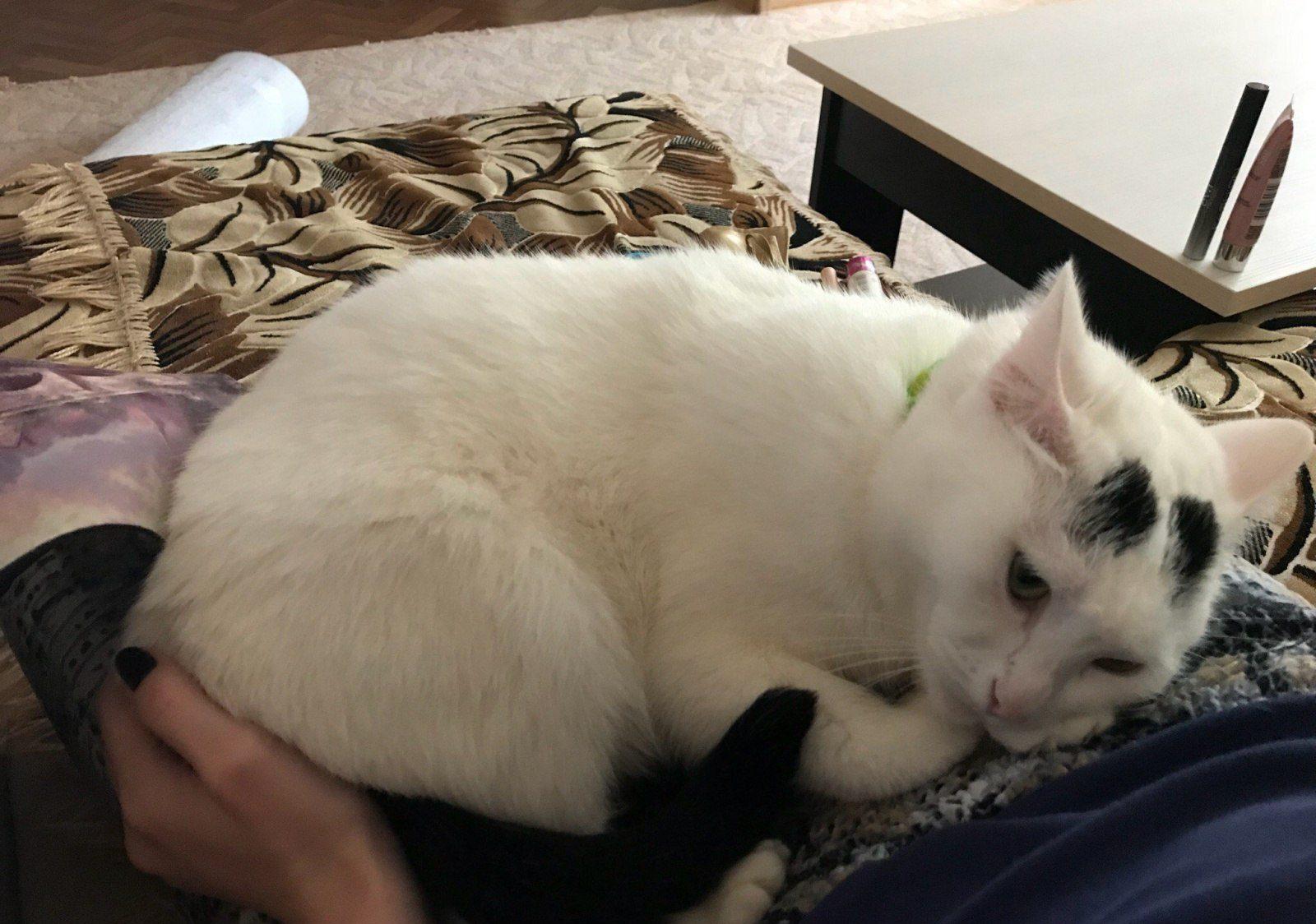 кошка лежит на коленях хозяйки