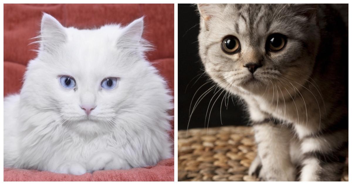 Окружающий мир глазами кошки особенности кошачьего зрения