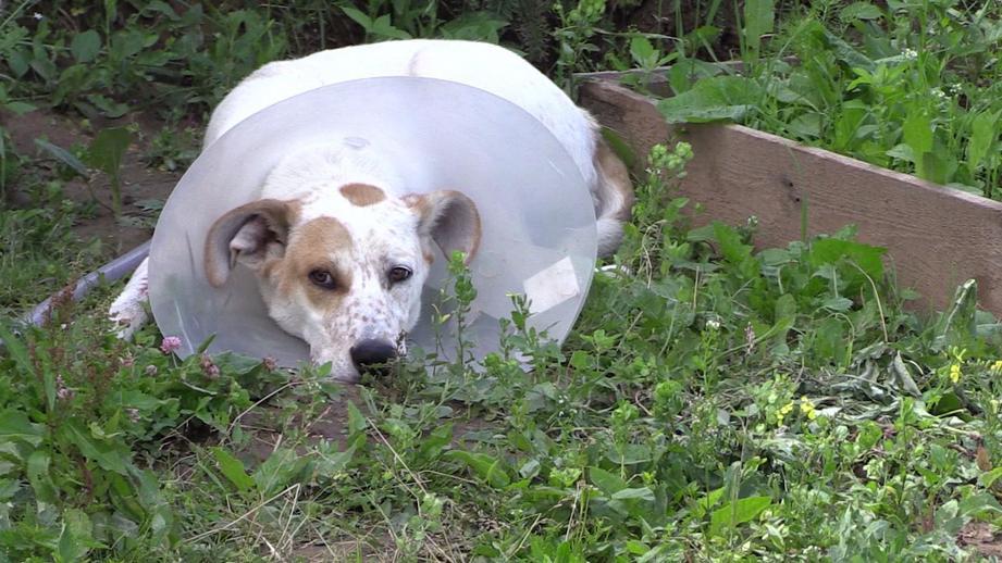3 девушки ушли из дома ради собаки! Спят на полу, едят с коленки, но лечат брошенного пса...