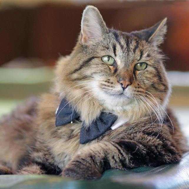 кот вельвет