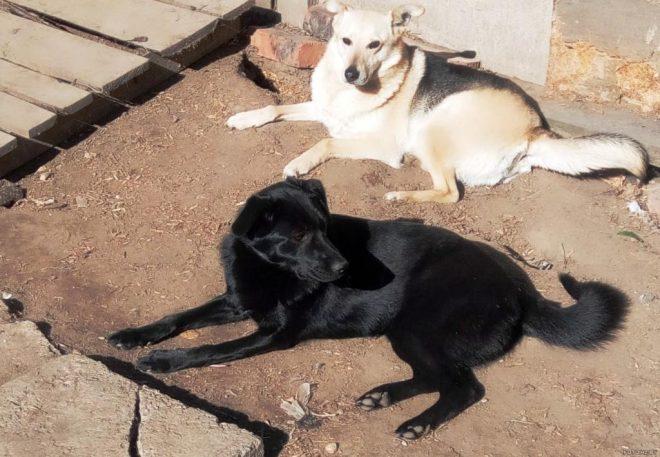 две собаки на земле