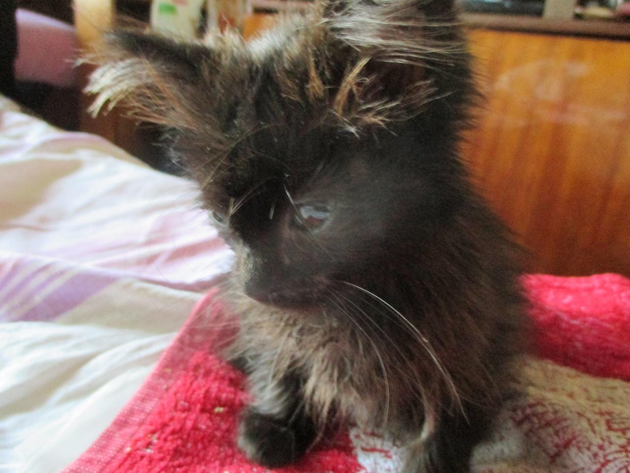 черный котенок опустил мордочку