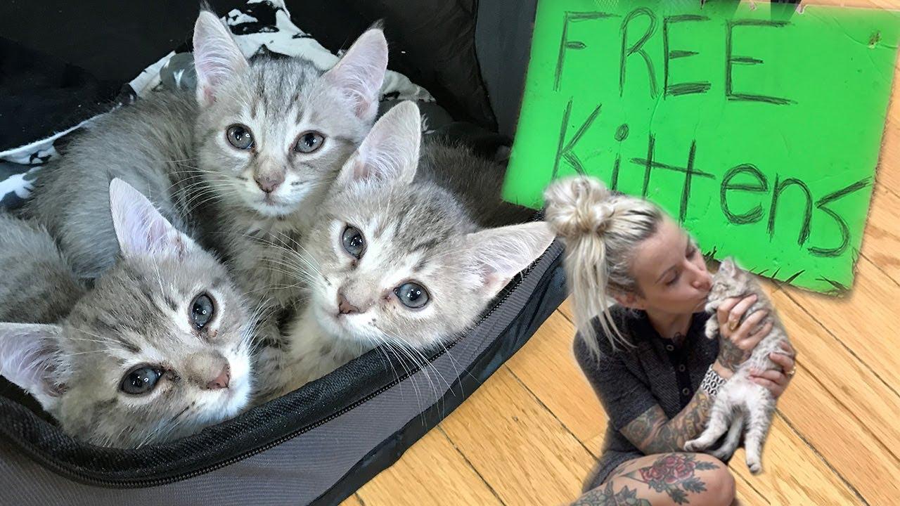 коллаж с котятами