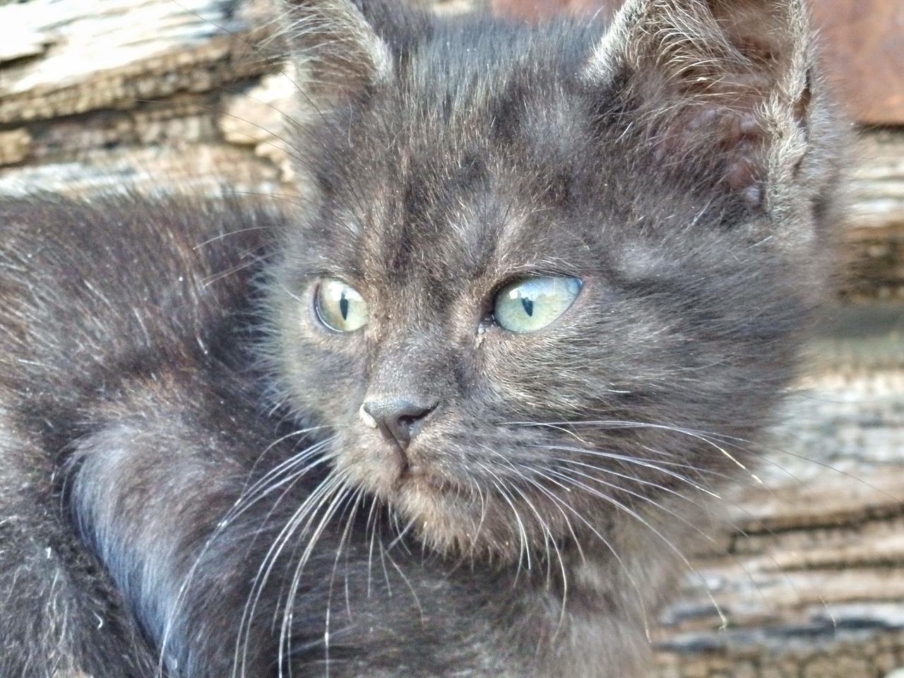 серый котенок на улице