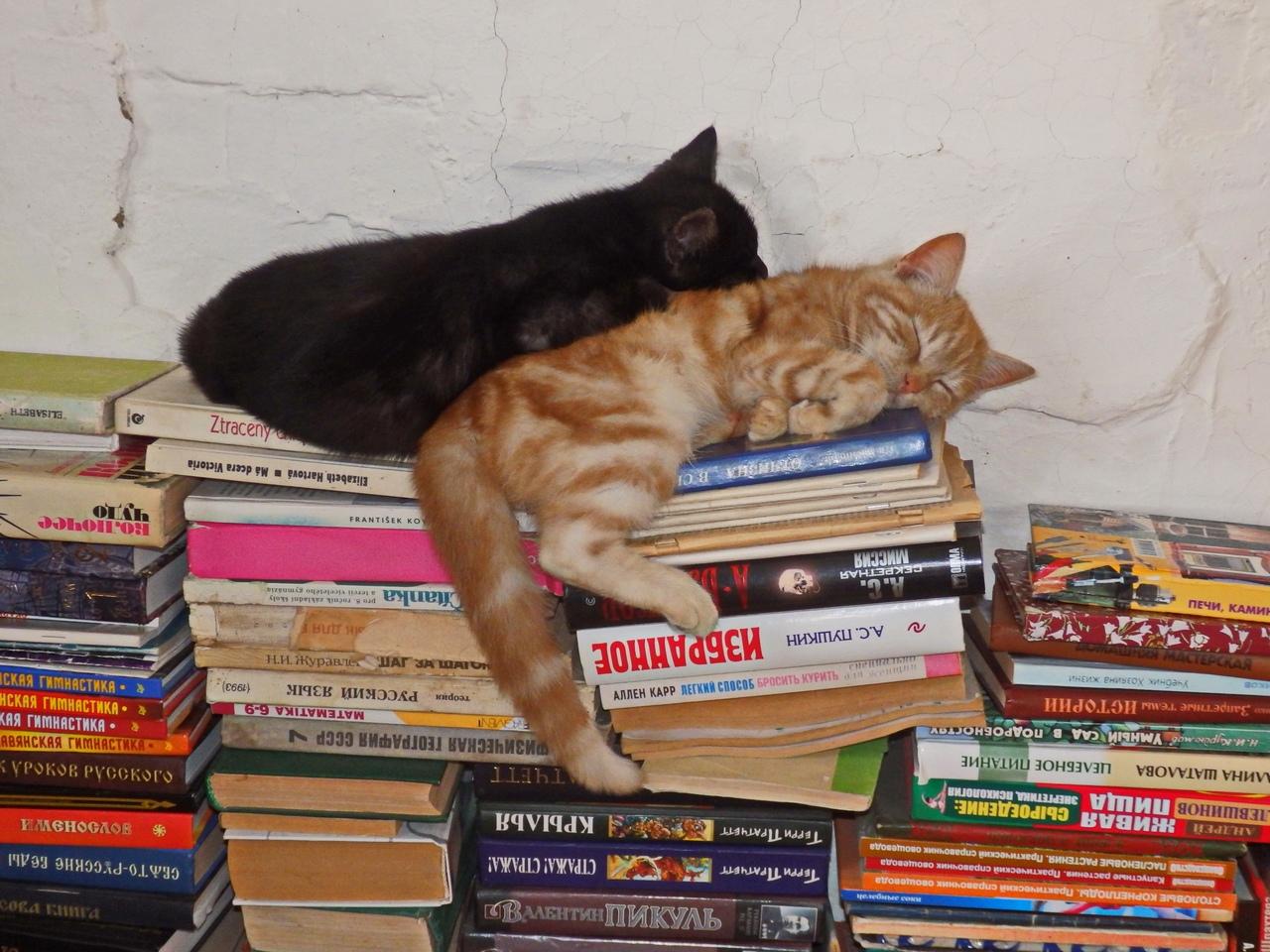рыжий и черный котята
