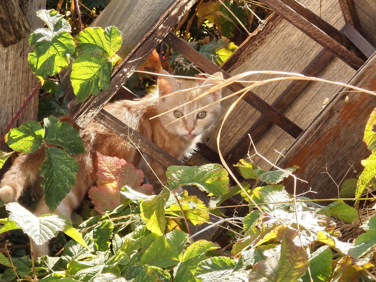 рыжий кот в траве