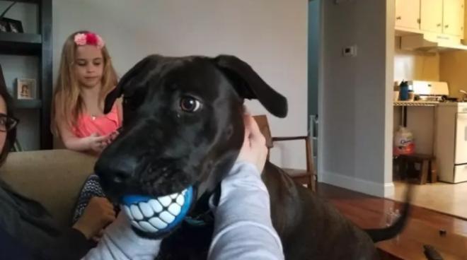 песик и зубы