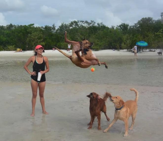 песик прыгает на море