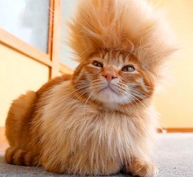 кот с прической
