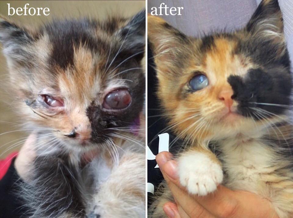 котенок до и после