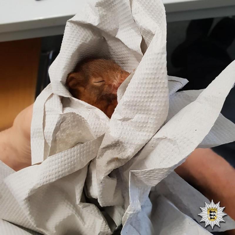 бельчонок уснул в руках у человека